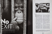 Orangutan extinction. Smithsonian Magazine, USA