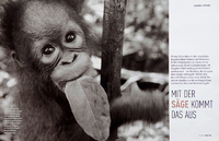 Orangutans Survival in Borneo. German Geo.