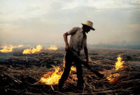 Burning the sugar cane fields in Colombia.