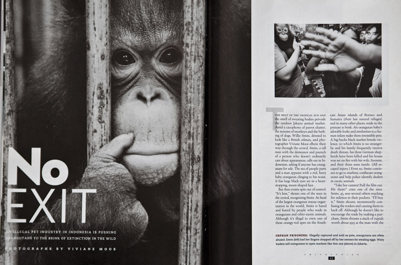 Orangutan extinction. Smithsonian Magazine, USA : TEAR SHEETS : Viviane Moos |  Documentary Photographer