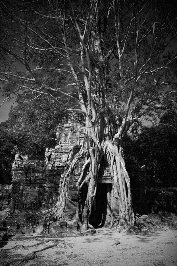 : FEATURE: The Trees of Angkor : Viviane Moos |  Documentary Photographer